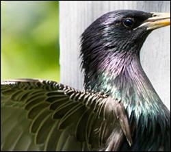 bird control Benbrook