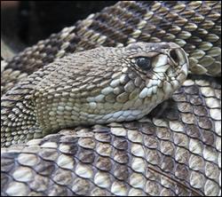 snake removal Benbrook